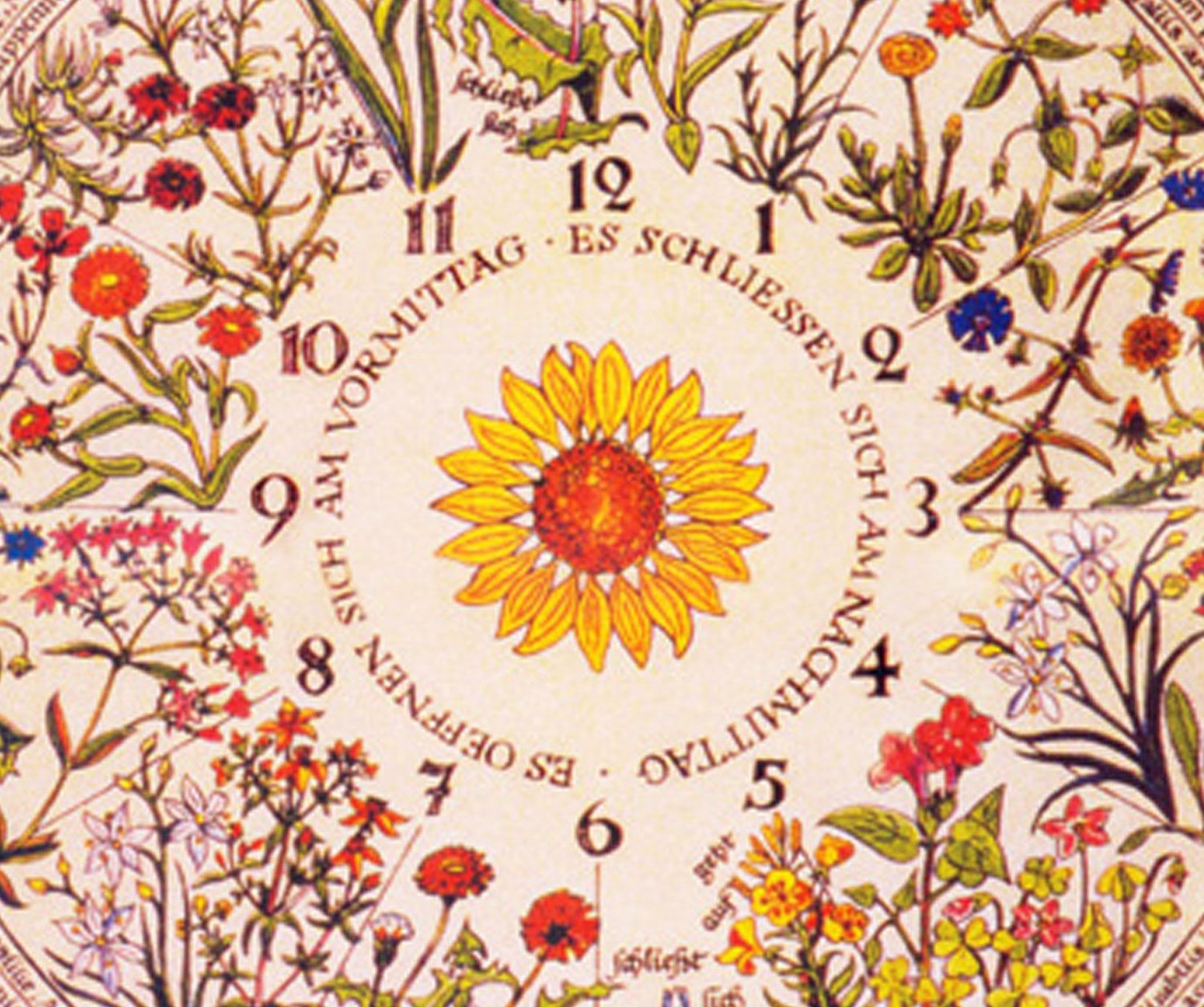 The Victorian Botanical Clock