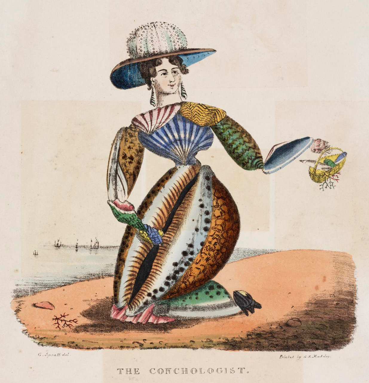 How The Victorian Craze For Conchology Became A Billion
